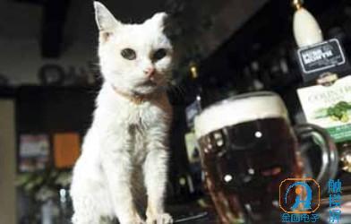 """英国""""百岁""""猫咪常年生活在KTV.jpg"""